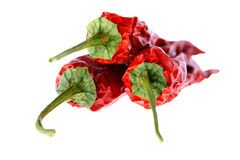 Red pepper. Pods of dried red pepper on a white background royalty free stock images