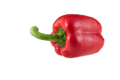 Red pepper. With a green pod on a white background Royalty Free Stock Image