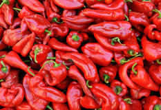 Red pepper Stock Image