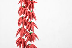 Red pepper. A bunch of red pepper Stock Photography