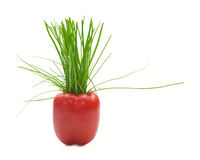 Red Pepper And Green Onion Royalty Free Stock Photography