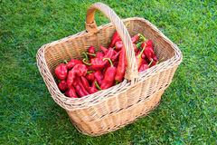 Red Pepper in the Basket Royalty Free Stock Images
