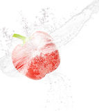 Red pepper be surround by water Royalty Free Stock Photography
