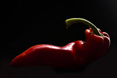 Red Pepper on Black Background Stock Image
