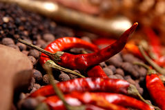 Red pepper and  black pepper on the dark background 2 Royalty Free Stock Photos