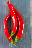 Red pepper on blue background Stock Image