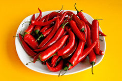 Red pepper chili Stock Photography