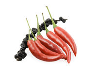 Red pepper chili and a black bell pepper. On a branch Stock Image