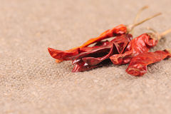 Red pepper chilli Stock Image