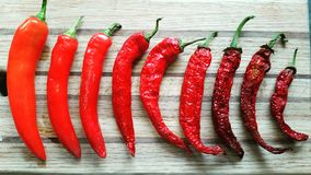Red pepper collection Stock Photography