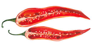 Red pepper. Pepper cut in half, watercolor painting Stock Photo