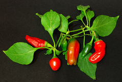 Red pepper on dark background Royalty Free Stock Photo