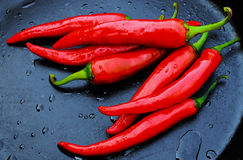 Red pepper on a dark background. With water drops Stock Photos