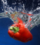 Red pepper falling into water Royalty Free Stock Image