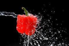Red pepper gets hit by a water Royalty Free Stock Photography