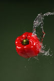 Red Pepper on Green Background Stock Photos