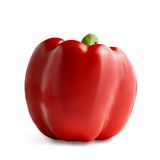 Red pepper isolated. On white background stock images