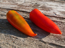 Red pepper on old oak wood Royalty Free Stock Photography