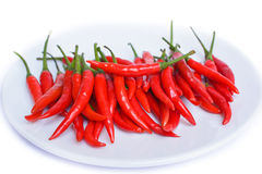 Red pepper. Royalty Free Stock Photos