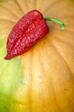 Red pepper on the pumpkin Royalty Free Stock Photography
