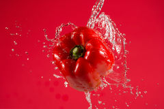 Red Pepper on Red Background Royalty Free Stock Photos