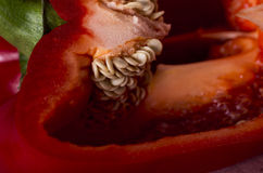 Red Pepper Seeds Macro Royalty Free Stock Photo