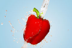 Red pepper splash on blue background Royalty Free Stock Images