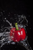 Red pepper splashed by water. Stock Image