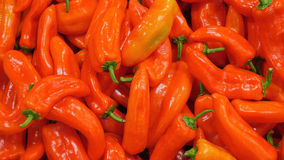 Red, pepper Stock Images