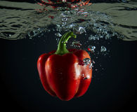 Red pepper underwater Stock Photography