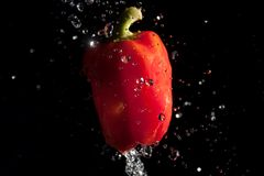 Red pepper and water drops on black Royalty Free Stock Photos