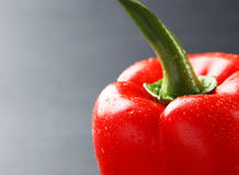 Red pepper with water drops on a grey background Stock Image