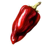 Red pepper, whole vegetable, isolated object, watercolor illustration on white Royalty Free Stock Photos