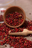 Red peppercorn Royalty Free Stock Image