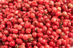 Red peppercorns background. Royalty Free Stock Photos