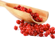 Red Peppercorns Royalty Free Stock Photos