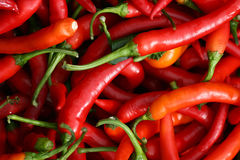 Red  peppers Royalty Free Stock Image