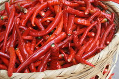 The red peppers Royalty Free Stock Images