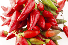 Red peppers Stock Photography
