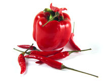 Red peppers. Isolated still of red peppers Royalty Free Stock Photos