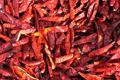 Red Peppers. Detailed view of red chili peppers drying in the sun in India Stock Photos