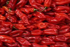 Red peppers backdrop royalty free stock photos