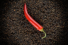 Red peppers on black peppercorns Royalty Free Stock Image