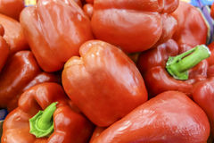 Red peppers. Peppers change color when they reach maturity Royalty Free Stock Image