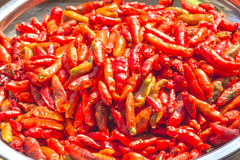 Red peppers are dried.  Royalty Free Stock Photos