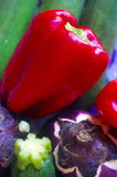 Red peppers, Eggplant and Zucchini Royalty Free Stock Images