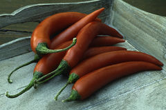 Red peppers. Stock Images
