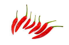 Red peppers isolated on white background. Red peppers isolated on white Royalty Free Stock Photography