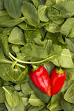 Red peppers on leaves of spinach Stock Photo