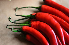 Red peppers over soft brown background royalty free stock image